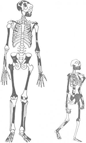 왼쪽은 170만 년 전의 여인 KNM-ER 1808. 오른쪽의 330만 년 전 여인 루시와 비교해 보면 두뇌와 몸집이 훌쩍 커졌다. - 치매와 맞바꾼 육식 제공